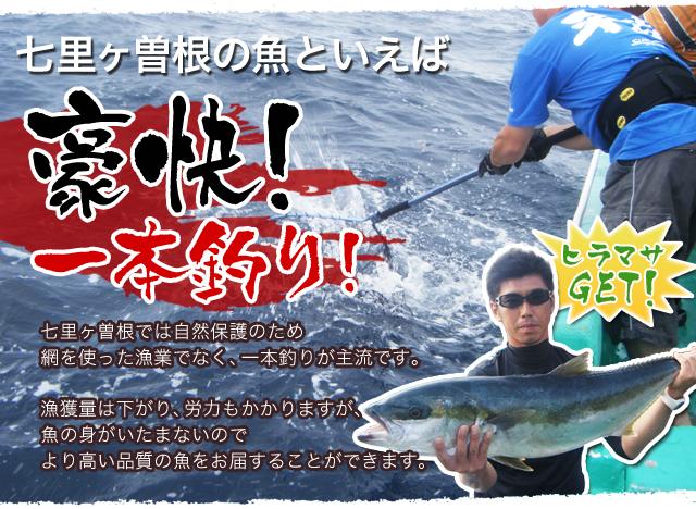 七里ヶ曽根の魚といえば豪快!一本釣り! 七里ヶ曽根では自然保護のため網を使った漁業でなく、一本釣りが主流です。漁獲量は下がり、労力もかかりますが、魚の身がいたまないのでより高い品質の魚をお届することができます。